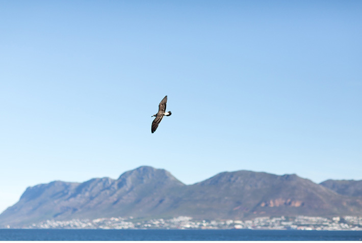 Engagement_Shoot_Kalk_Bay_Cape_Town_Wedding_Photographer_Catherine_Mac_Photography_1